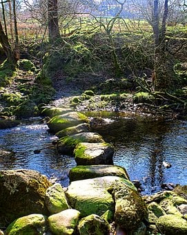 Stone, Stepping, Stream, Brook, Trees, Nature, Rock