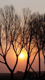 Sunset, Nature, Tree, Sunrise, Sun, Landscape, Sky