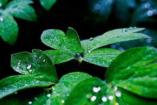 Water, Water Drop, Tropical, Leaf, Rain