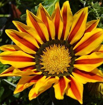 Yellow Flower, Sun Flower, Yellow Napvirág
