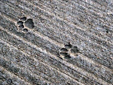 Traces, Cat, Track, Concrete, Paws, Paw Print