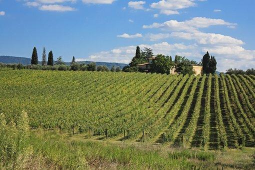 Toscana, Italy, Vine, Grape, Field, Tuscany, Italian