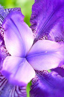 Flower, Macrophoto, Macro, Flowers, Nature, Plant