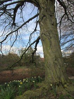 Tree, Spring, Daffodils, Nature, Green, Natural, Season
