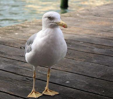 Gull, Pier, Sea, Water, Bird, Nature, Animal, Seagull