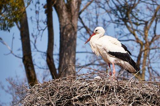 Stork, White, Nest, Scrim, Monogamous, Children