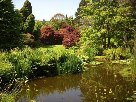 Park, Pond, Reflection, Trees, Nature