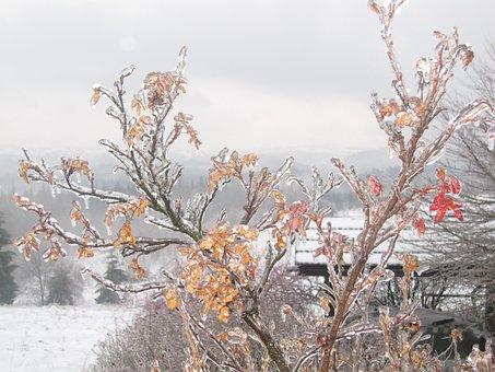 Winter, Poland, Ice, Snow, Tree, Landscape, White