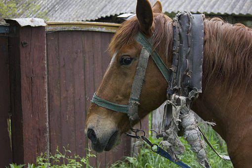 Horse, Animal, Village, Stallion, Farm, Cicindela