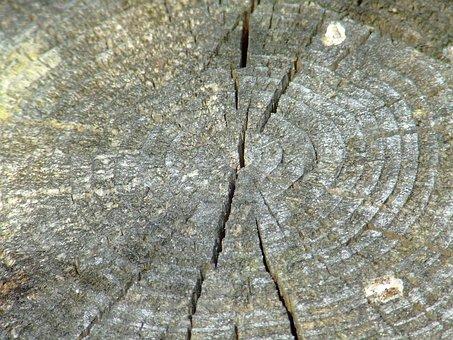 Ring, Rings, Strain, Stump, Wooden, Knot