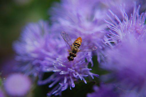 Flower, Insect, Nature, Spring, Garden, Summer, Blossom