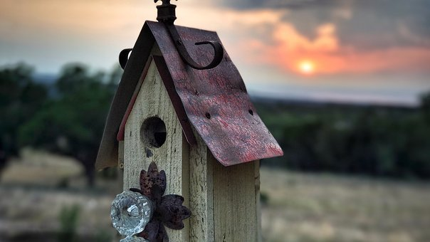 Bird House, Birdhouse, Nature, Sunset, Sun, Bird