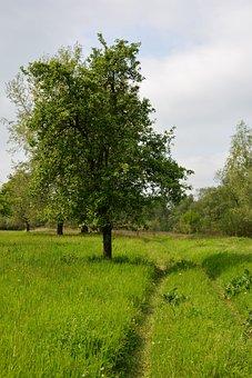 Jabłonka, Apple, Way, Meadow, Landscape, Grass, Green