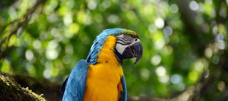 Parrot, Ara, Bird, Colorful, Blue, Plumage, Animal