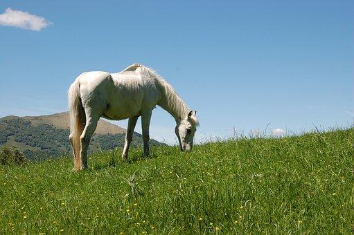 Horse, Nature, Animals, Mountain, Pasture, Foal, Prato