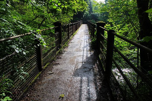 Bridge, Nature, Green, Natural, Wood, Trees, Foliage