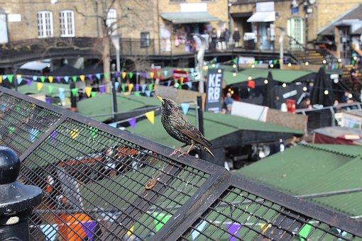 Bird, Candem Town, London