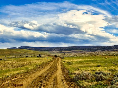 Wyoming, Landscape, Sky, Clouds, Cattle, Cows, Grazing