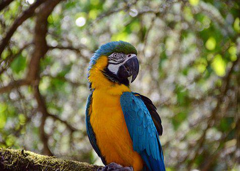 Ara, Parrot, Colorful, Yellow, Yellow Breast, Animal