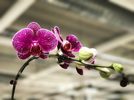 Orchid, Asia, Flower, Flowering, Colorful, Meadow