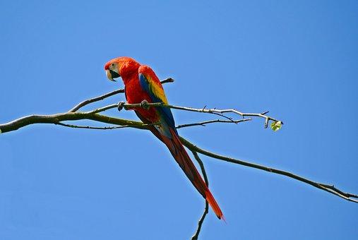 Parrot, Ara, Bird, Colorful, Animal, Colorful Plumage