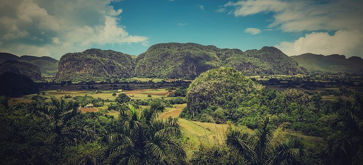 Cuba, Country, Nature, Green, Trees, Palm Trees