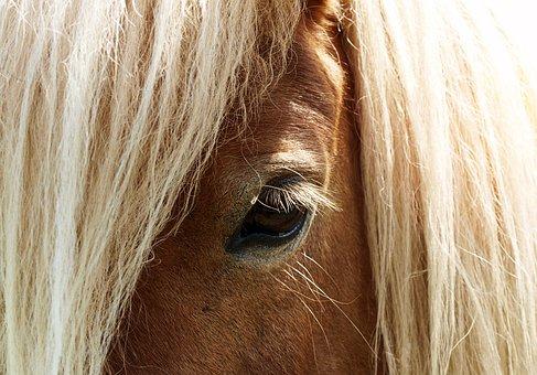 Horse, Eye, Horse Head, Horse Eye, Pferdeportrait