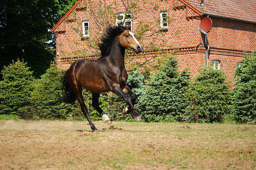 Horse, Gallop, Brown, Pony, Pasture, Meadow, Summer