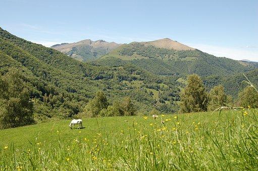Pasture, Mountain, Nature, Horse, Prato, Green, Sky