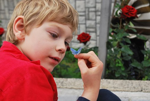 Boy, Butterfly, Hand, Finger, Watching, Learning