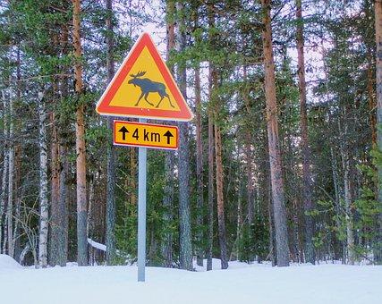 Panel, Lapland, Momentum, Snow, Pine, Winter, Wood