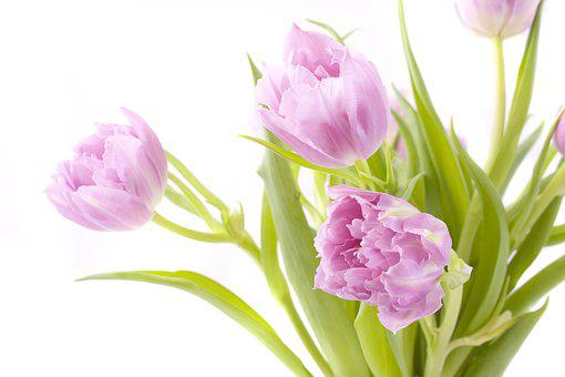 Flowers, Tulips, Spring, Floral, Nature, Season, Summer