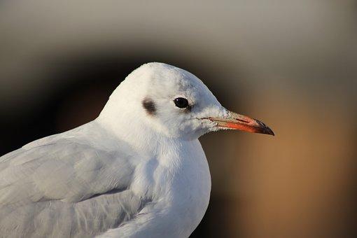 Seagull, Sea, Bird, Animal, North Sea, Water, Hamburg