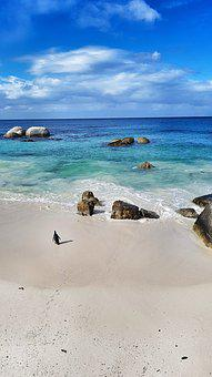 Beach, Sea, Penguin, South Africa, Cape Town