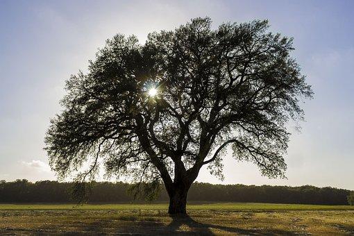 Tree, Sun, Stream, Trees, Nature, Ray, Sky, Green