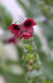 Bell, Flower, Red, Wild Flower, Plant