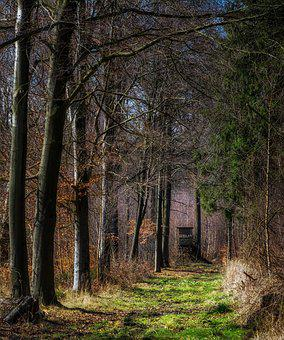 Forest, Away, Promenade, Sunny, Meadow, Forest Path