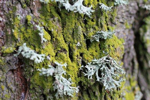 Lichen, Trunk, Wood, Tree, Nature, Moss, Bark, Texture