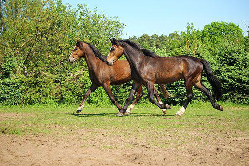 Horse, Pony, Trot, Pasture, Brown, Seahorses