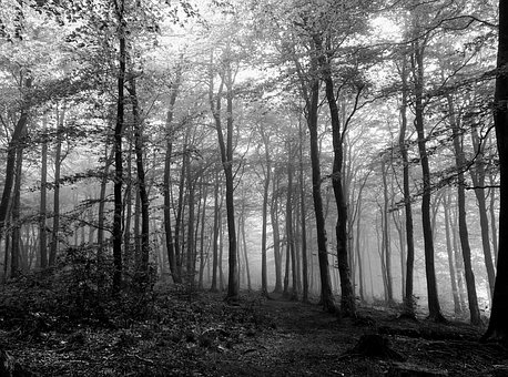Forest, Black, White, Spooky, Trees, Wood, Leaves