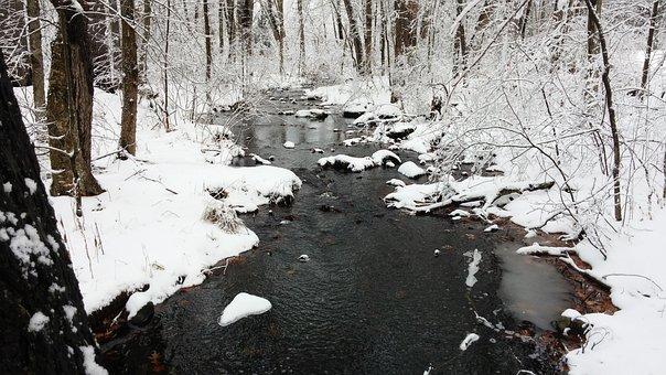 Stream, Forest, Winter