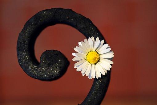 Flower, Snail, Metal, Iron, Daisy, White, Small, Yellow