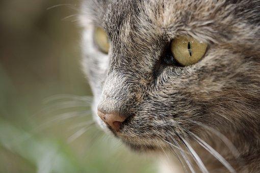Cat Eye, Overview, Animal Portrait, Animal, Cute