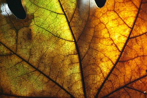Leaves, Macro, Beautiful, Yellow, Background