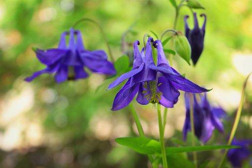 Flowers, Bells, Grass, Summer, Green, Blue, Nature