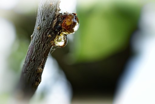 Tree, Branch, Nature, Macro, Bud, Sap, Cry, Spring