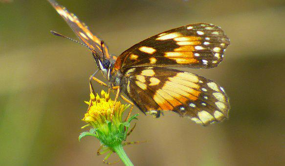 Butterfly, Pollen, Flower, Yellow, Insect, Wings