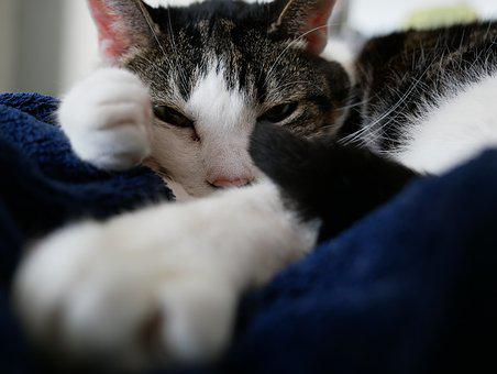 Cat, Relaxed, Sleep, Cute, Domestic Cat, Animal