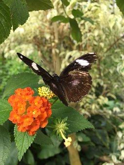 Butterfly, Flower, Closeup, Spring, Nature, Summer