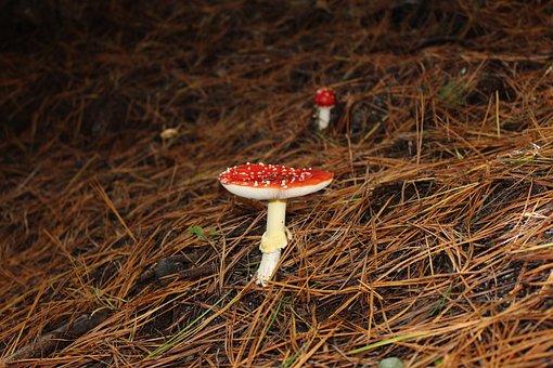 Fungus, Forest, Mushroom, Nature, Natural, Season